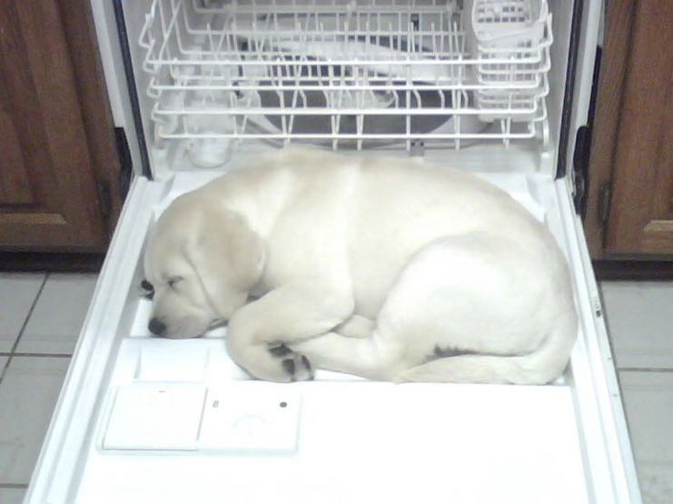 Puppy in Dishwasher