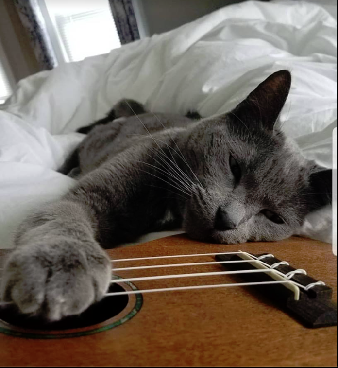 Cat on Guitar